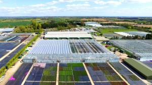 Binsted, Farplants Finishing Centre, Star Plants Nursery