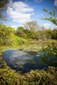 Pond at Walberton Nursery