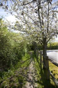 Public footpath adjoining Binsted Nursery