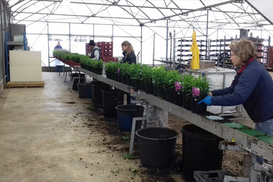 A team cleans and labels plants ready for Despatch