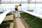 Applying Naturalis-L in Propagation house