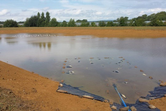 Sea birds waste no time in settling in whilst the reservoir fills