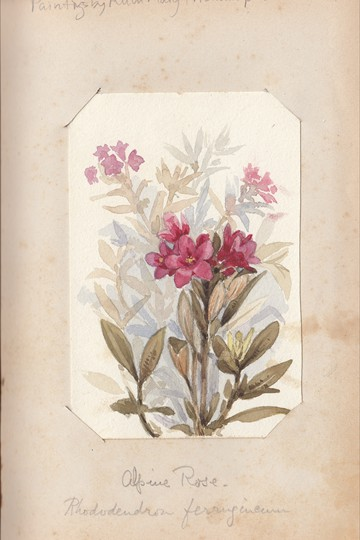 Ruth Mary Tristram, 1900-1914, rhododendron ferrugineum
