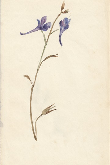 Unknown flower painting
