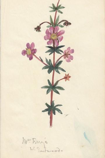 Unknown flower w. Sandwood