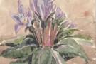 October 10th 1904 - common flower on the hills around Algeciras
