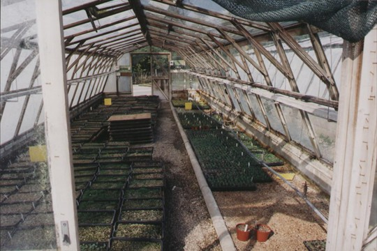 A traditional wooden frame glasshouse at Binsted Lane