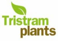 wholesale growers tristam plants