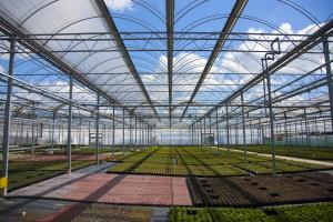 Mixed crops in open roof structure at Binsted Nursery