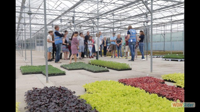 The tour takes in one of Walberton's newer glasshouses, where new plug plants are held prior to potting