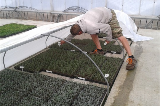 Batch labels being checked on rooting lavenders