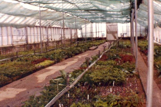 Old Propagation House, 1978