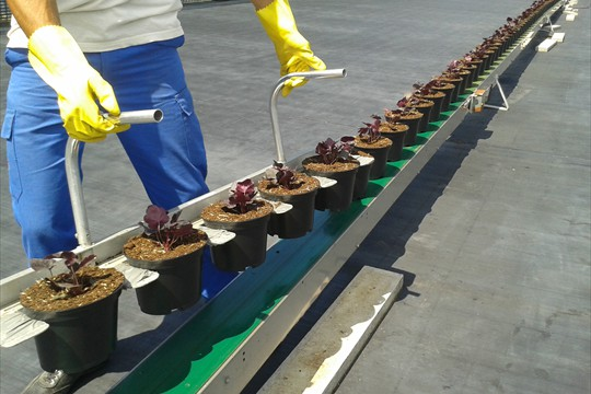 Pot forks enable even lifting and spacing of potted product